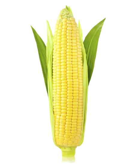 corn-on-the-cob-maize-ear-sweet-corn-stock-photography-png-favpng-quyEHRxaEadr23M4xPabXDU4A-removebg-preview